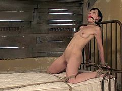 Pretty dark-haired girl Elise Graves is having a good time indoors. She allows some dude tie her up to a bed and then gets her snatch unforgettably drilled with a dildo.