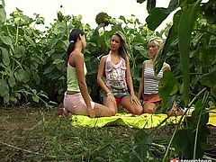 Three tasty looking besties head to the park to have a lovely picnic. Sizzling cuties take off their clothes in order to oral stroke perky tits before a real group sex orgy begins.