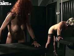 Welcome to dive into a rough and nonstop group sex provided by Fun Movies sex clip. Zealous pale blondie gets her wet pussy polished with a dildo. At the same time curly busty redhead gets busy with giving a solid blowjob for sperm. Gosh, both bitches with nice butts are surely futuristic and voracious lovers...