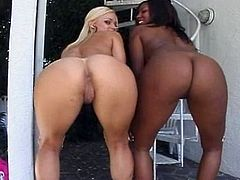 Blonde and ebony are sharing huge cock in stunning hardcore threesome sex