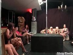 Sexy hot babes go crazy jerking off a bear