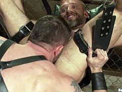 The dominant gay guy will lick the submissive one's asshole before fucking it hard while he's tied up and strapped in this BDSM vid.
