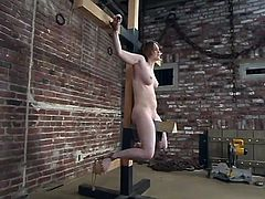 Horny Tracey Hilton gets chained by her master. Later on he puts steel balls on her head and hands. Then she gets her tits pinched with claws.