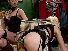 Gorgeous Maitresse madeline is humiliating Sean Spurt