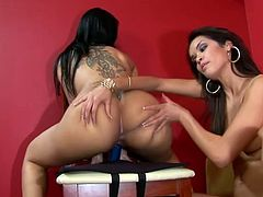Brunette bomshells Daisy Marie and Helena Heirres are having a good time together. They pet each other ardently and then pound each other's vags with dildos.