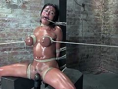 Brunette milf Charley Chase lets a dude called Lochai put her into irons in a basement. The man chains the bitch and does everything to make her scream and get an orgasm.