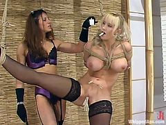 Lewd mistress Kym Wilde is having fun with chubby chick Abbey wearing stockings. Kym attaches a clothes peg to Abbey's tongue and then fucks the cutie's snatch with a strapon.