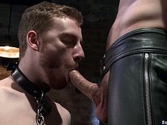 Submissive Sebastian Keys gives a blowjob to Hayden Richards and gets tied up. After that Sebastian gets his ass fisted like never before.