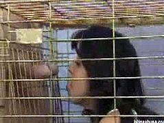 Pepper Foxxx is locked in a cage by two guys who let her out just when they want to fuck her. They make her throat sore and her pussy the same while fucking her hard.