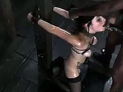 Veruca James is one of the best cocksuckers in the business. With that adorable face and firm titties she got all tied up while wearing black pantyhose and her body covered with oil got forced deepthroat.