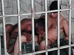 This horny black gay has a blast sucking his friend's big hard cock in jail before turning around to take a hard ass fuck.