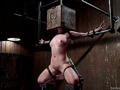 Sweet and sexy Liv is down in the dungeon, with a box on her head and rat traps on her nipples. The dirty whore is in pain, but loves it, especially when her executor fingers her pussy and uses a vibrator inside her, so she can have some pleasure mixed with pain. She'll be begging for more soon!