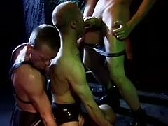 Cazzo Club brings you a hell of a free porn video where you can see how this gay bdsm orgy gets out of control at the club. These studs are ready to party hard!
