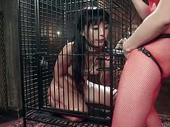 Marica Hase is naked, tied and caged. She is ready to go thru all those things, just for the pleasure of her loving mistress, Chanel Preston. This interracial lesbian duo perfectly knows the rules of this game, in which asian babe will be disgraced and fucked with a strapon by her horny dominatrix.