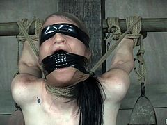 Do you love watching submissive women restrained in hard rope bondage and leather, enjoying a wonderful pain play and sex?! You came to the right place! Welcome to Hard Tied. Once you come in there is no going out. We guarantee it. Our charming restrained ladies will make you cum hard!