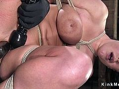 Natural huge tits babe toyed in hogtie